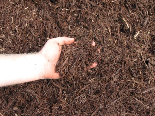 Brown Dyed Mulch 1