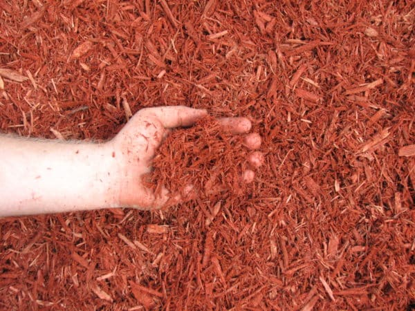 Red Dyed Mulch 1