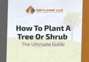 How To Plant A Tree Or Shrub - The Ultimate Guide 1