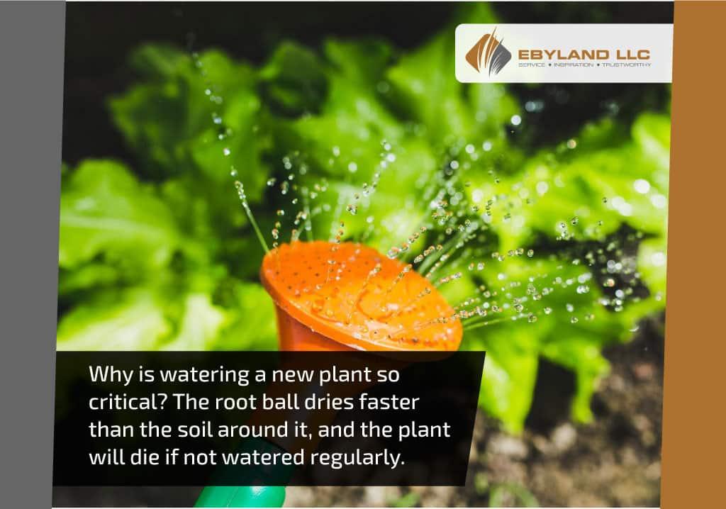 whyiswateringanewplant